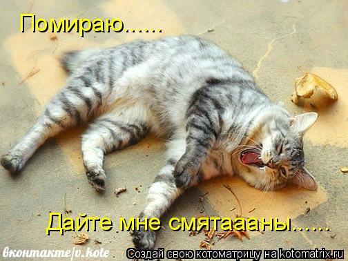 Котоматрица: Помираю...... Дайте мне смятаааны......