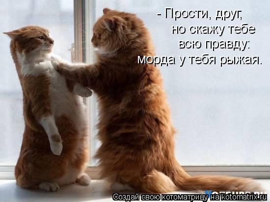 Котоматрица: - Прости, друг, но скажу тебе всю правду: морда у тебя рыжая.