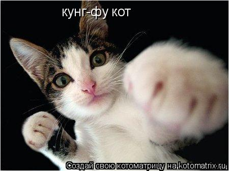 Котоматрица: кунг-фу кот