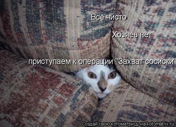 "Котоматрица: Всё чисто  Хозяев нет приступаем к операции ""Захват сосиски''"