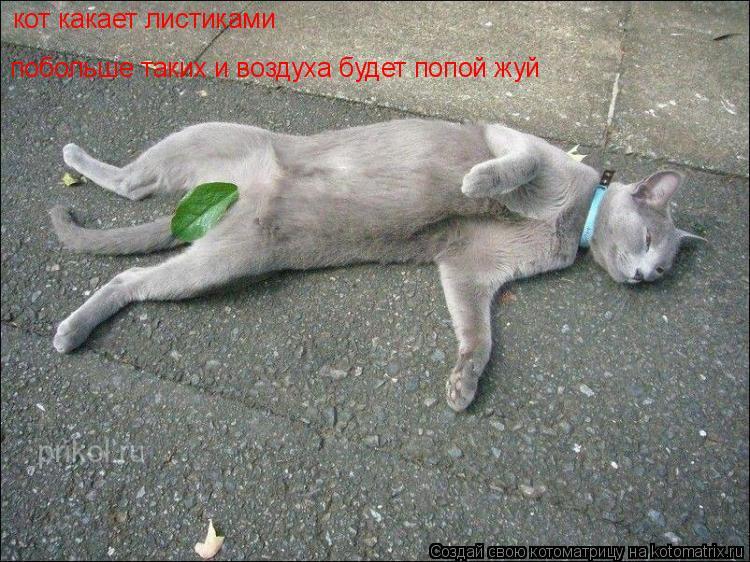 Котоматрица: кот какает листиками побольше таких и воздуха будет попой жуй