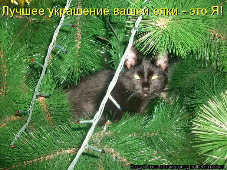 Котоматрица: Лучшее украшение вашей елки - это Я!