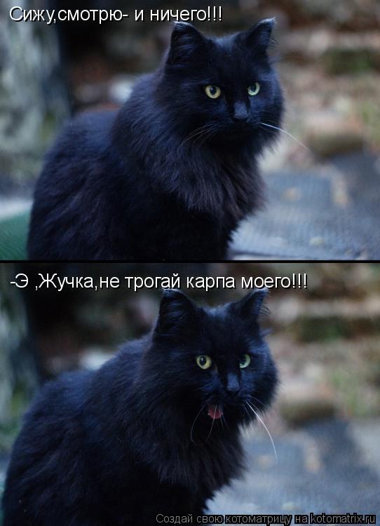 Котоматрица: Сижу,смотрю- и ничего!!! -Э ,Жучка,не трогай карпа моего!!!