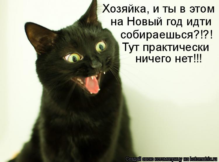 Котоматрица: Хозяйка, и ты в этом на Новый год идти собираешься?!?! Тут практически ничего нет!!!