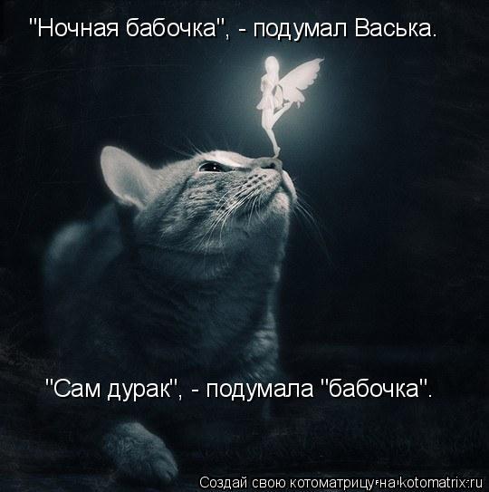 """Котоматрица: """"Ночная бабочка"""", - подумал Васька. """"Сам дурак"""", - подумала """"бабочка""""."""