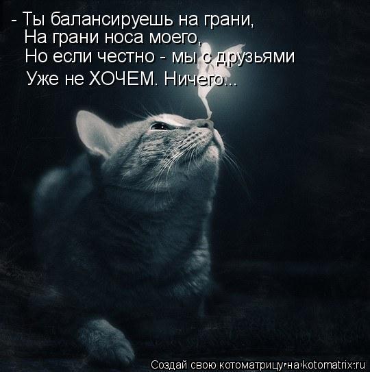 Котоматрица: - Ты балансируешь на грани, На грани носа моего, Но если честно - мы с друзьями Уже не ХОЧЕМ. Ничего...