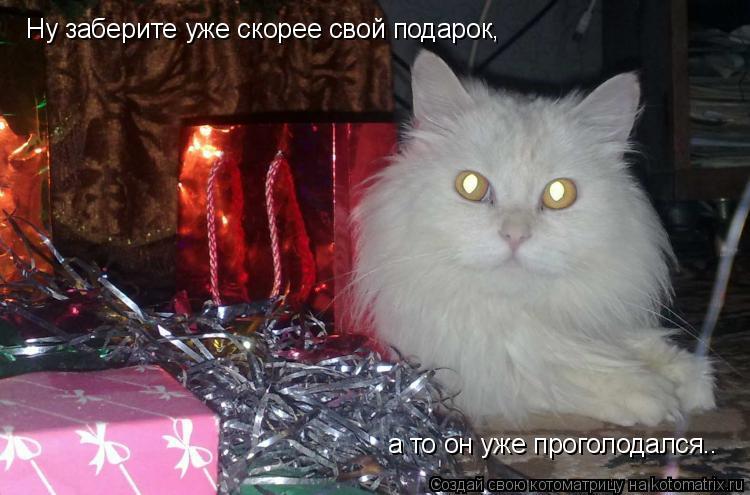 Котоматрица: Ну заберите уже скорее свой подарок,  а то он уже проголодался..