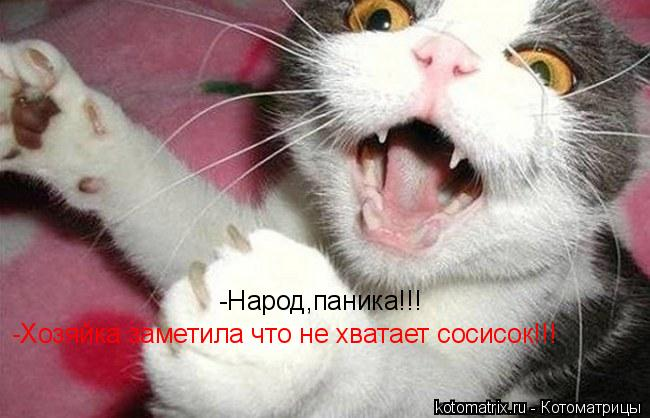 Котоматрица: -Народ,паника!!! -Хозяйка заметила что не хватает сосисок!!!