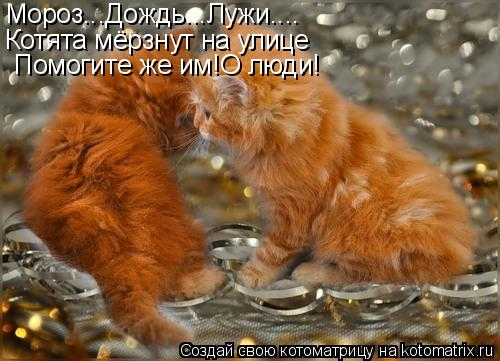 Котоматрица: Мороз...Дождь...Лужи.... Котята мёрзнут на улице Помогите же им!О люди!