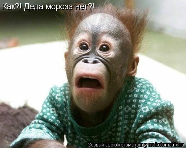 Котоматрица: Как?! Деда мороза нет?!
