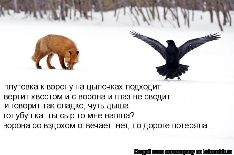 Котоматрица: плутовка к ворону на цыпочках подходит вертит хвостом и с ворона и глаз не сводит и говорит так сладко, чуть дыша голубушка, ты сыр то мне на