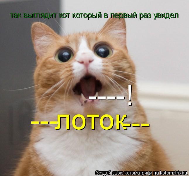 Котоматрица: лоток --- так выглядит кот который в первый раз увидел  --- ----!