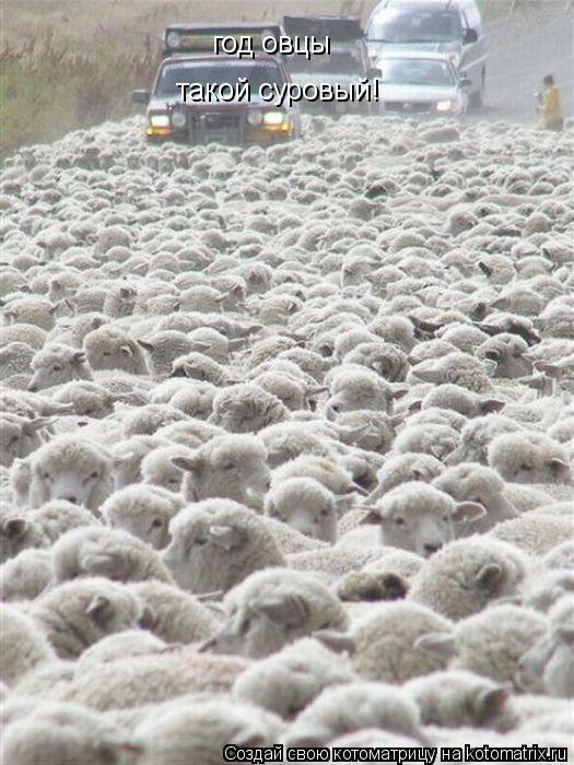 Котоматрица: год овцы такой суровый!