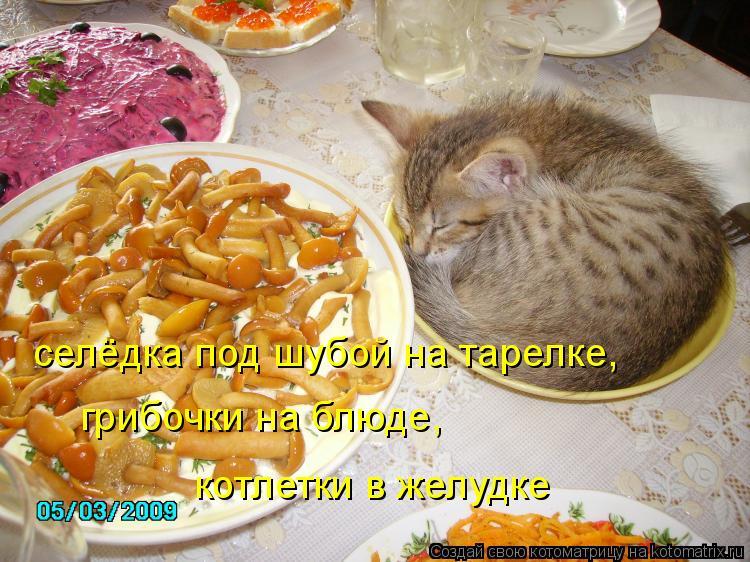Котоматрица: селёдка под шубой на тарелке, грибочки на блюде, котлетки в желудке