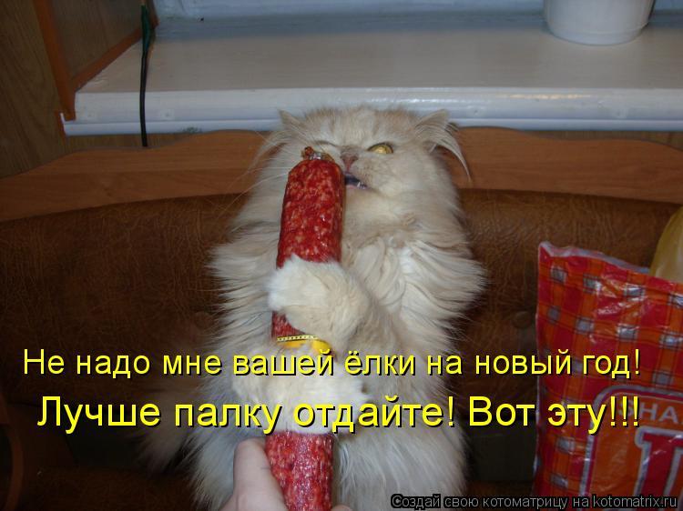 Котоматрица: Не надо мне вашей ёлки на новый год! Лучше палку отдайте! Вот эту!!!