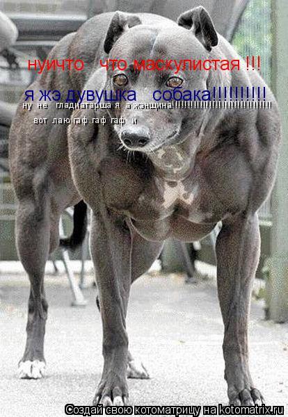 Котоматрица: нуичто   что маскулистая !!! я жэ дувушка   собака!!!!!!!!!! ну  не   гладиатарша я  а жэнщина!!!!!!!!!!!!!!!!!!!!!!!!!!!!!!!! вот  лаю гаф гаф гаф  и