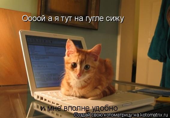 Котоматрица: Оооой а я тут на гугле сижу и мне вполне удобно