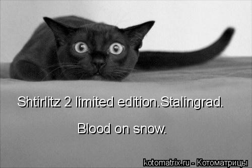 Котоматрица: Shtirlitz 2 limited edition.Stalingrad. Blood on snow.