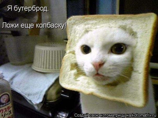 Котоматрица: Я бутерброд. Ложи еще колбаску!