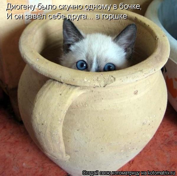 Котоматрица: Диогену было скучно одному в бочке, И он завёл себе друга... в горшке