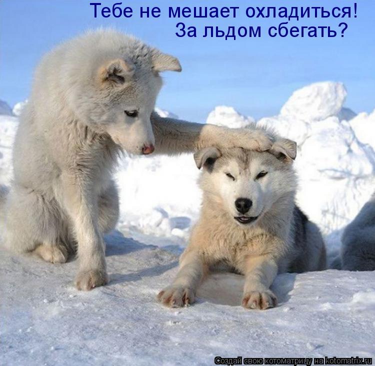 Котоматрица: Тебе не мешает охладиться! За льдом сбегать?
