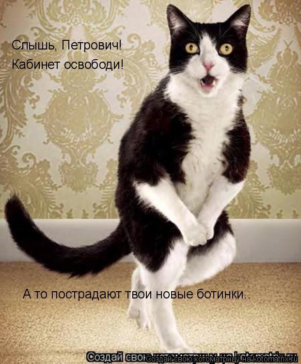 Котоматрица: Слышь, Петрович! Кабинет освободи! А то пострадают твои новые ботинки..
