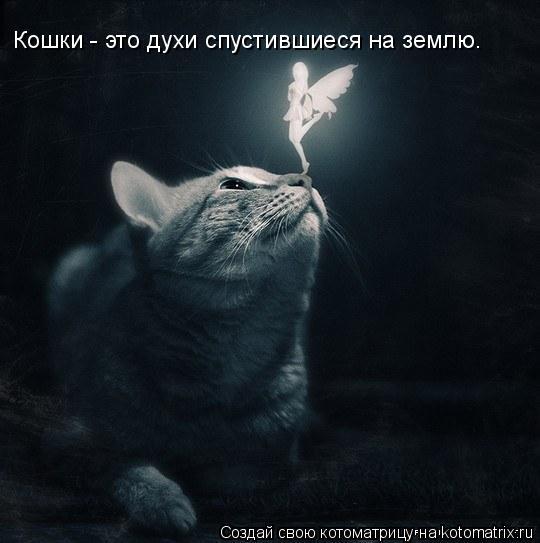 Котоматрица: Кошки - это духи спустившиеся на землю.