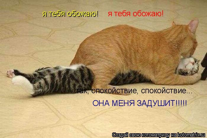 Котоматрица: я тебя обожаю! я тебя обожаю! так, спокойствие, спокойствие... ОНА МЕНЯ ЗАДУШИТ!!!!!