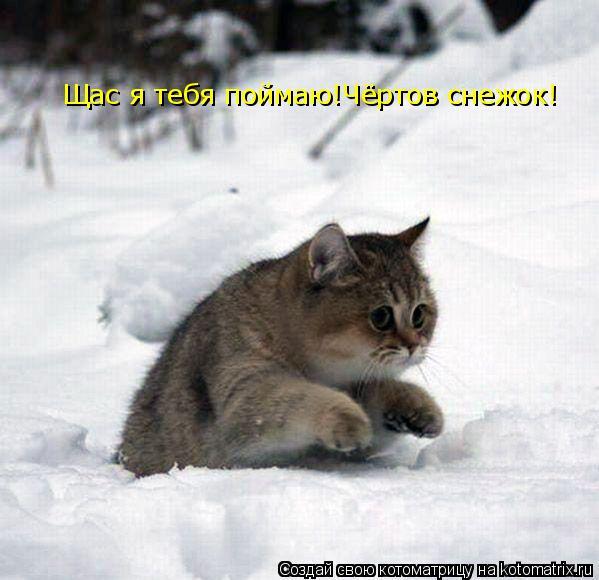 Котоматрица: Щас я тебя поймаю!Чёртов снежок!