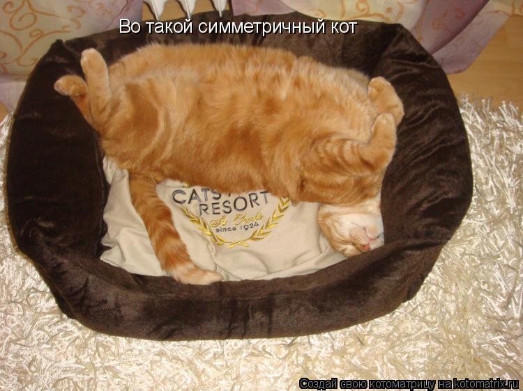 Котоматрица: Во такой симметричный кот