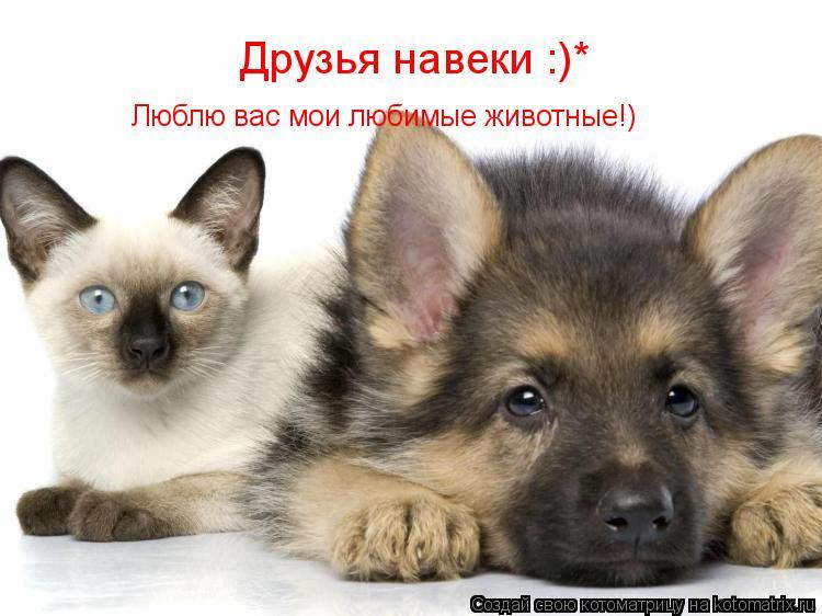 Котоматрица: Друзья навеки :)* Люблю вас мои любимые животные!)