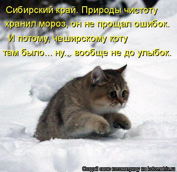 Котоматрица: Сибирский край. Природы чистоту хранил мороз, он не прощал ошибок. И потому, чеширскому коту там было... ну... вообще не до улыбок.