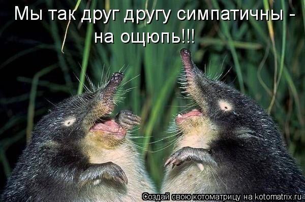 Котоматрица: Мы так друг другу симпатичны - на ощюпь!!!
