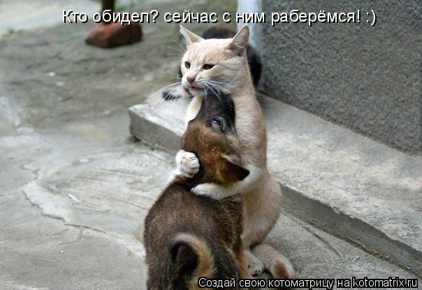 Котоматрица: Кто обидел? сейчас с ним раберёмся! :)