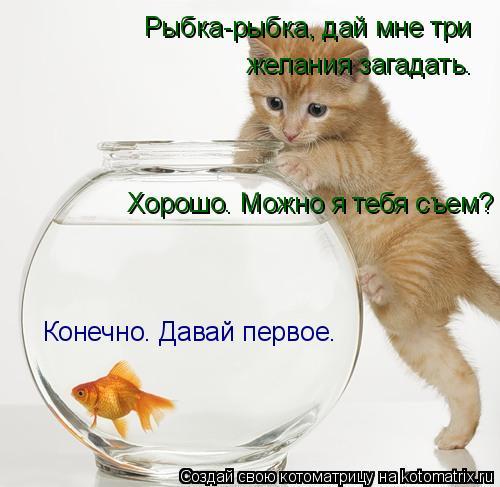 Котоматрица: Рыбка-рыбка, дай мне три  желания загадать. Конечно. Давай первое. Хорошо. Можно я тебя съем?