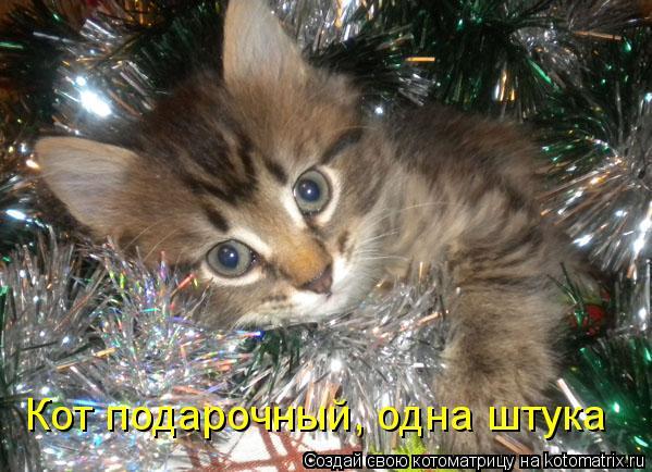 Котоматрица: Кот подарочный, одна штука
