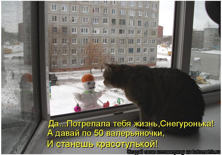 Котоматрица: Да...Потрепала тебя жизнь,Снегуронька! А давай по 50 валерьяночки,  И станешь красотулькой!