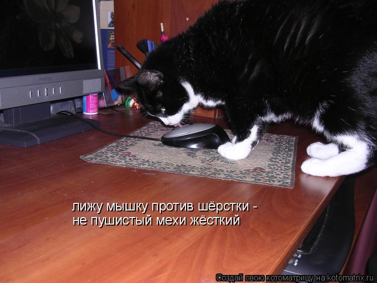 Котоматрица: лижу мышку против шёрстки -  не пушистый мехи жёсткий
