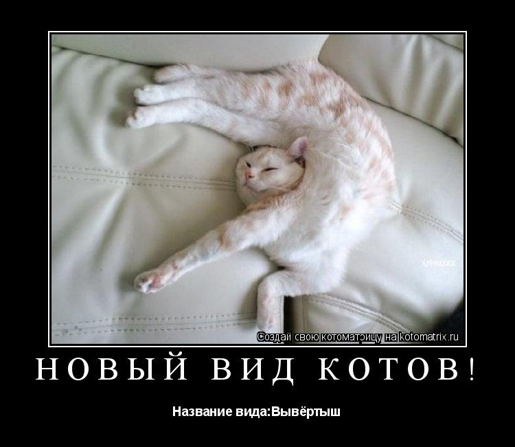 Котоматрица: Новый вид котов! Название вида:Вывёртыш