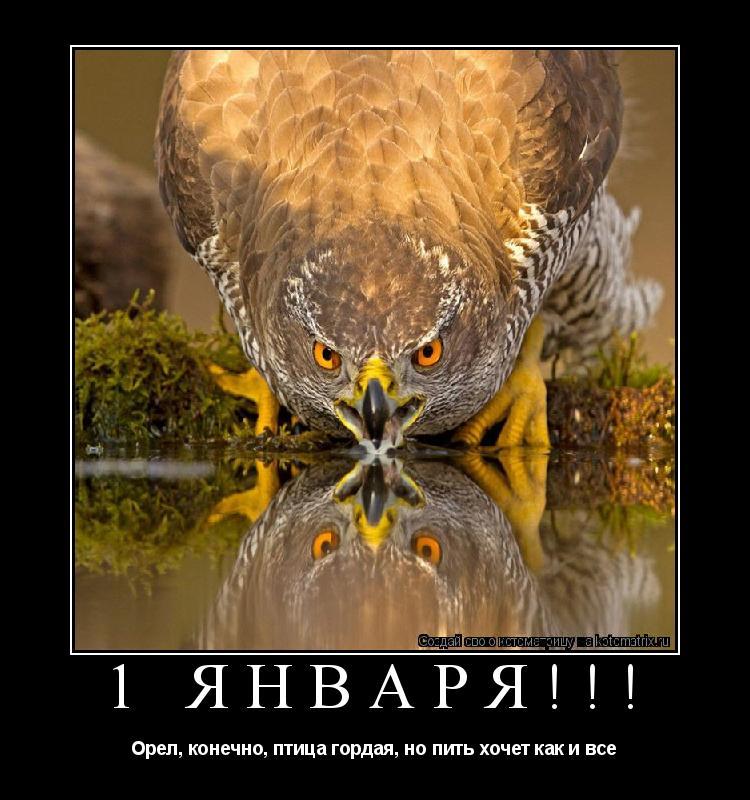 Котоматрица: 1 января!!! Орел, конечно, птица гордая, но пить хочет как и все