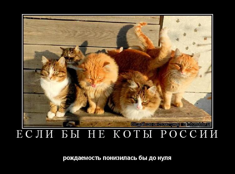 Котоматрица: если бы не коты россии рождаемость понизилась бы до нуля