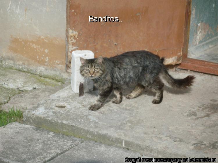 Котоматрица: Banditos..