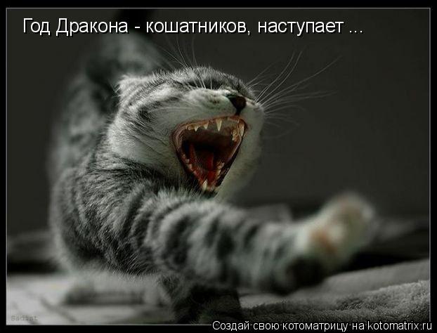 Котоматрица: Год Дракона - кошатников, наступает ...