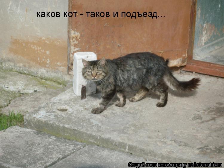 Котоматрица: каков кот - таков и подъезд...