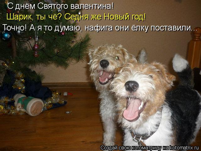 Котоматрица: С днём Святого валентина! Шарик, ты чё? Седня же Новый год! Точно! А я то думаю, нафига они ёлку поставили...