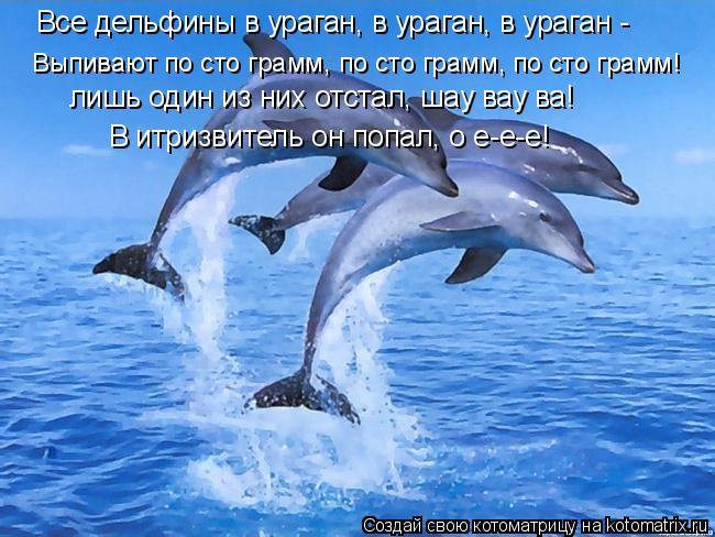 Котоматрица: Все дельфины в ураган, в ураган, в ураган -  Выпивают по сто грамм, по сто грамм, по сто грамм! лишь один из них отстал, шау вау ва! В итризвитель