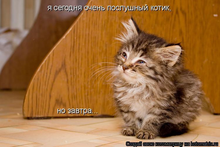 Котоматрица: я сегодня очень послушный котик, но завтра...
