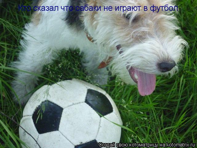 Котоматрица: Кто сказал что сабаки не играют в футбол