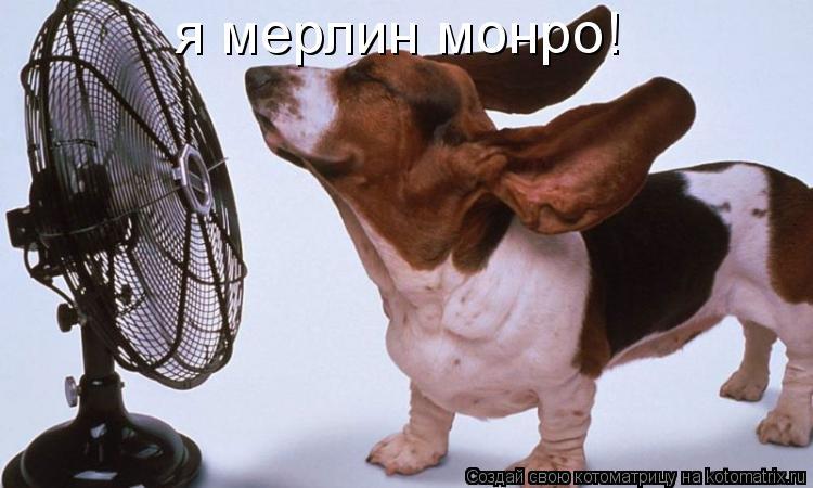 Котоматрица: я мерлин монро!