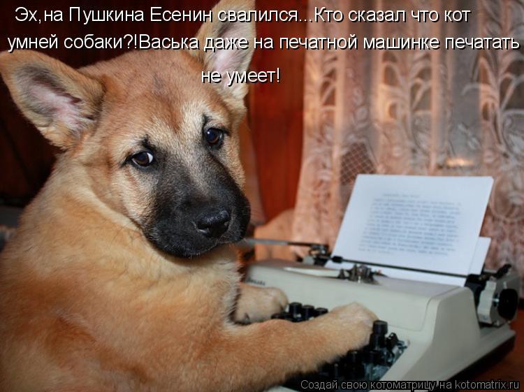 Котоматрица: Эх,на Пушкина Есенин свалился...Кто сказал что кот умней собаки?!Васька даже на печатной машинке печатать не умеет!